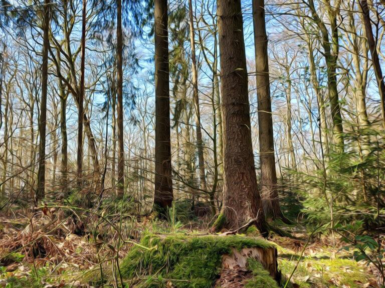 Wald am Landhotel Schröder zwischen Hamburg und Bremen